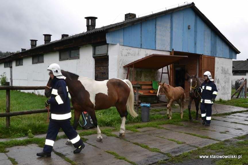 Ewakuacja zwierząt z gospodarstwa