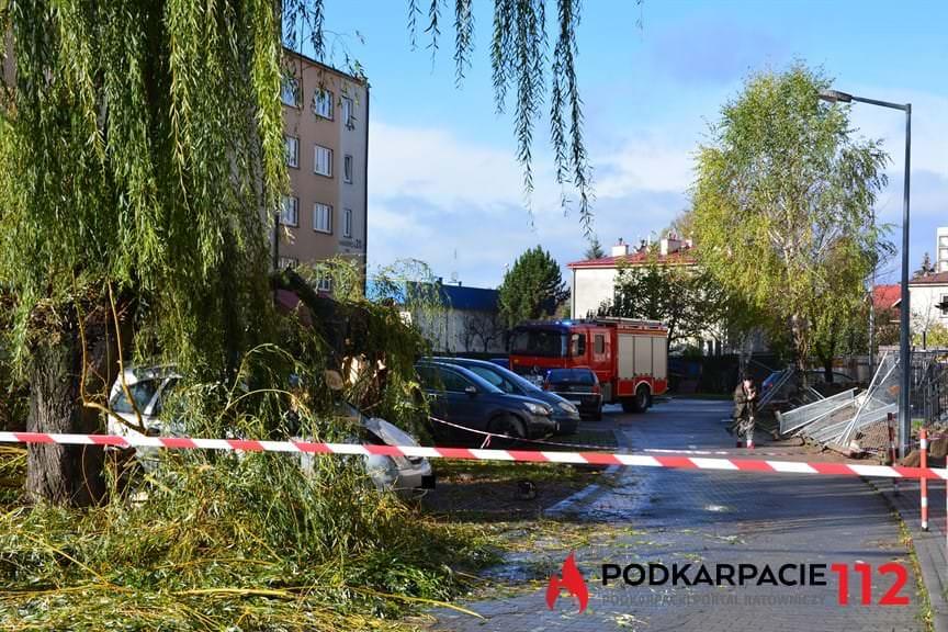 Powalone drzewo na ulicy Hanasiewicza